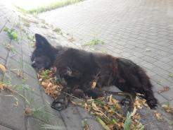Mittagspause kurz vor EInbeck, Pedro schläft unter eine viel befahrenen Brücke